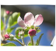 Blooming Buds Poster