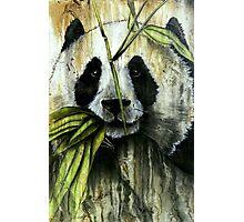 Beautiful Panda Face Closeup Photographic Print