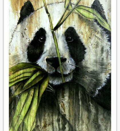 Beautiful Panda Face Closeup Sticker