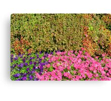 Natural background with many colorful plants. Canvas Print