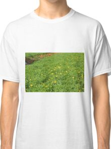 Green meadow with yellow flowers. Classic T-Shirt