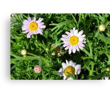 Pink beautiful flowers in the green grass. Canvas Print