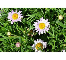 Pink beautiful flowers in the green grass. Photographic Print