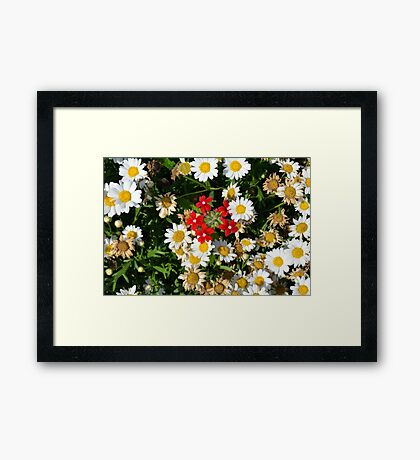Beautiful white flowers pattern, with small red flowers in the center. Framed Print