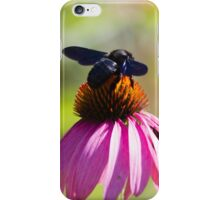 bee on echinacea in the garden iPhone Case/Skin