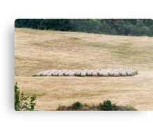 hilly landscape with hay Metal Print