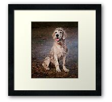 Dogs with game face on .36 Framed Print