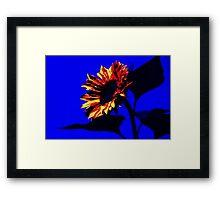 Burning Sunflower, Blue. Framed Print