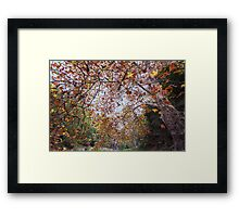 Autumn at Waterfall Gully Framed Print