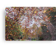 Autumn at Waterfall Gully Metal Print