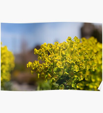 Yellow plant Poster
