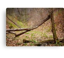 Fallen trees in a forest on springtime Canvas Print