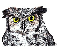 Owl with Yellow Eyes Photographic Print