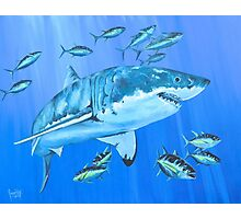 Great White Shark with Schooling Tuna Photographic Print