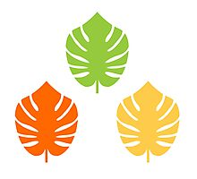 Beautiful Colorful Exotic Leaves CollectionExotic leaves set. Vector cartoon Illustration Photographic Print