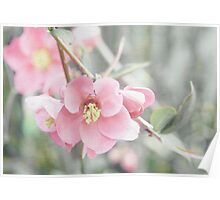 Textured Quince Blossoms Poster