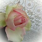 Rose delicate colors by Ana Belaj