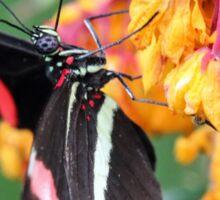 Butterfly, Seaforde Butterfly House Sticker
