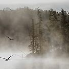 Morning on Costello Creek in Algonquin Park by Jim Cumming