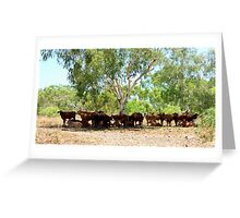 Shady Cows - Pilbara, WA Greeting Card
