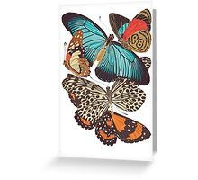 TIR-Butterfly-4 Greeting Card
