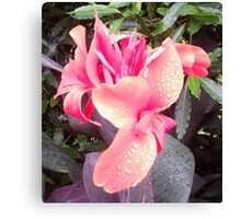 Pink Canna Lily Photo with Dew or Rain Drops Canvas Print