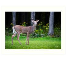 Whitetail Deer Buck Art Print
