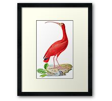TIR-Brazil-Bird-5 Framed Print