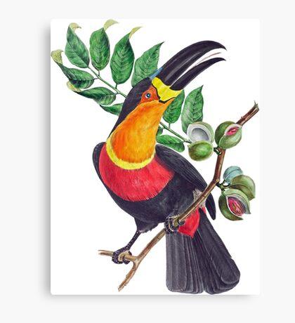 TIR-Brazil-Bird-4 Canvas Print