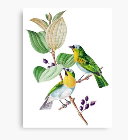 TIR-Brazil-Bird-2 Canvas Print