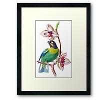 TIR-Brazil-Bird Framed Print