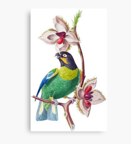FF - Brazil-Bird Canvas Print