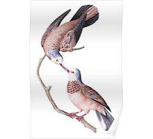 TIR-Brazil-Bird-3 Poster