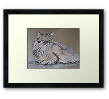 Long-haired kitty cat Framed Print