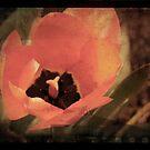 Tulip Grunge by angelandspot