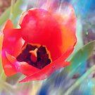 Tulip by angelandspot