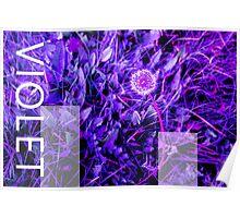 Violet Dandelion Poster