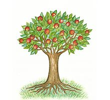 UNIQUE APPLETREE WITH RIPE APPLES  Photographic Print