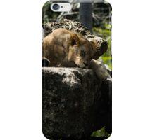 Sleeping Lioness iPhone Case/Skin