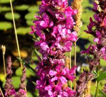 The wild purple flower. Sticker
