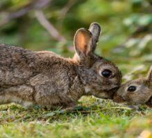 Cute Wildlife Tenderness Sticker