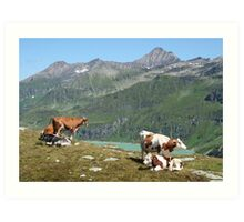 Dairy Cows High Up On A Mountain Art Print
