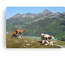 Dairy Cows High Up On A Mountain Canvas Print