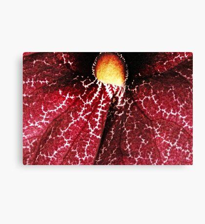 Red Dutchman's Pipe Flower - Macro Canvas Print