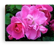 Governor General's Roses11 Canvas Print