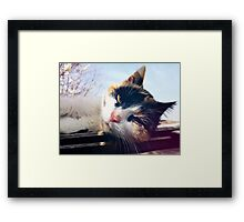 Lying cat Framed Print