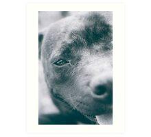 Delta - Staffordshire Bull Terrier Art Print