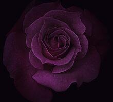 Purple Velvet by EbyArts