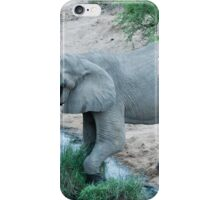Elephant in musth iPhone Case/Skin