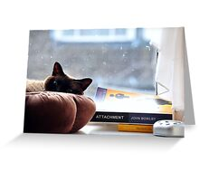 Cat chilling  Greeting Card